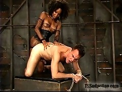 Hung Black TS mistress forces straight man to worship huge dick